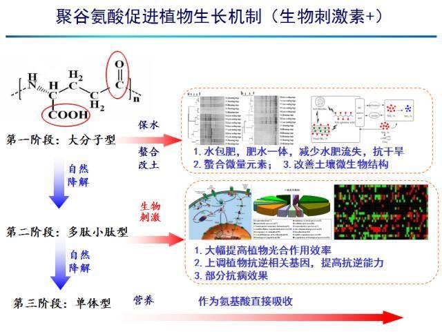 聚谷氨酸简介及其农用功效